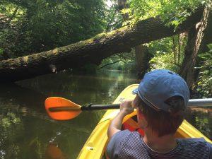 Kajaktour mit Kindern auf dem Rhin in Brandenburg mit Umfahren von Wurzeln und umgefallenen Bäumen
