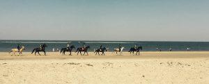 Pferde mit ihren Reitern in Schouwen-Duiveland am Strand von Renesse